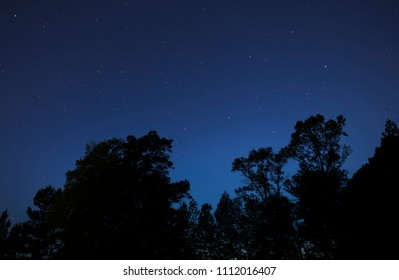 Tall treeline silhouetted by stars being at night in North Carolina
