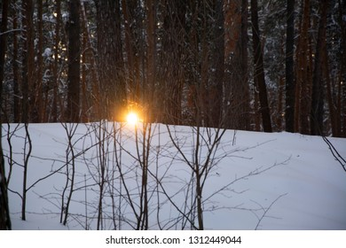 Tall trees ate in the dark forest with snow. The sun shines through the trees.