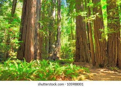 Tall Trees Loop in Redwood Nat'l. Park.