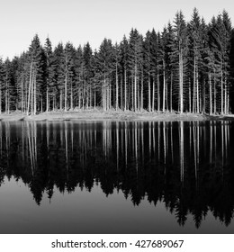 Tall trees reflected in water