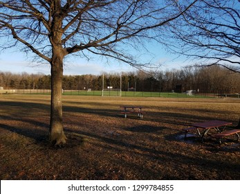 tall trees with shadows and grass and soccer or football field