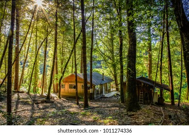 Tall trees surrond a small cabin on the Rogue River in Oregon