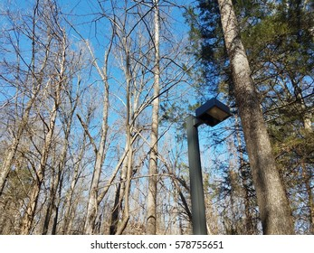 tall trees in the woods with a street light