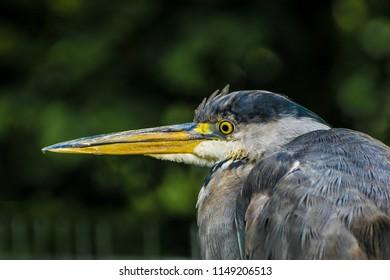 Tallaght animal park
