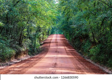 Tallahassee Canopy Roads & canopy road Images Stock Photos u0026 Vectors   Shutterstock