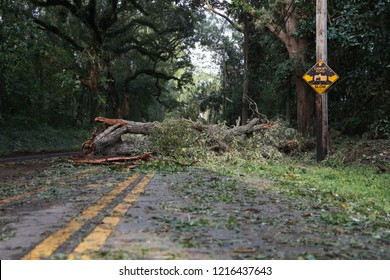 Tallahassee, FL / United States - October 11, 2018. Hurricane Michael toppled trees and power lines in Tallahassee, Florida. More than half of the city lost power during the Hurricane Michael.
