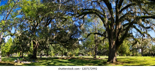 The Tallahassee Old City Cemetery is the oldest burial ground in the city, established in 1829by the Florida Territorial Legislature.