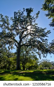 The Tallahassee Old City Cemetery is the oldest burial ground in the city, established in 1829 by the Florida Territorial Legislature.