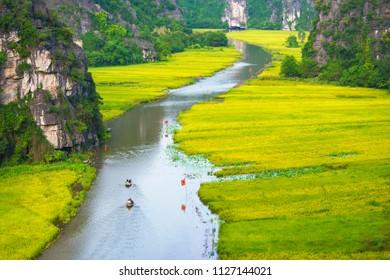 Tam Coc, Ninh Binh in rice harvest season