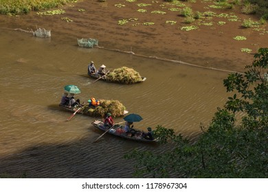 Tam Coc, Ninh Binh/ VietNam 05 23 2017: Farmer harvesting rice in Tam coc national park.  View from the mountain top in Ninh Binh province of Viet Nam.