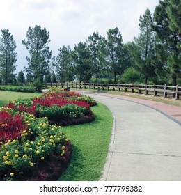 Taman Saujana Hijau, Putrajaya, Malaysia. A beautiful garden in the city with blooming flowers and pine trees.