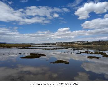 Tamar island swamp wetland