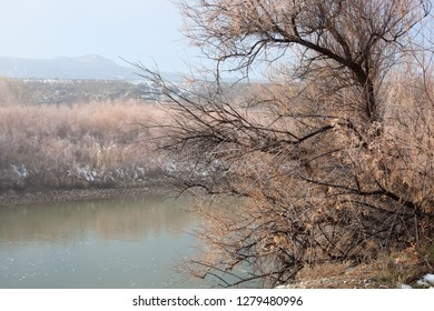 Tamarisk on the shore of the Colorado River after a winter storm with misty cliffs in the background. Taken near Fruita, Colorado