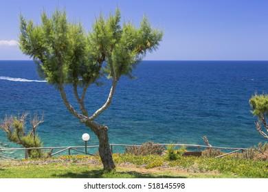 Tamarix trees and Mediterranean sea on a background. Crete island, Greece
