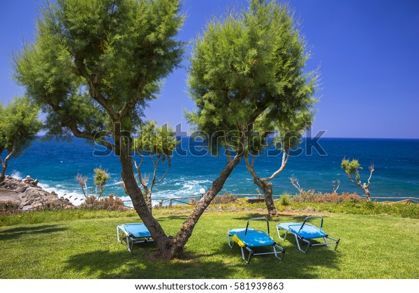 Tamarix trees and Mediterranean sea on a background. Crete island, Greece