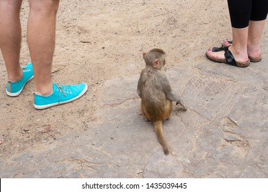Tame Young Monkey at Monkey Temple in India