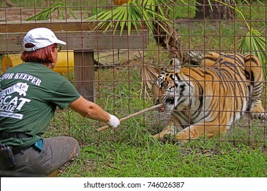 Big Cat Sanctuary Images, Stock Photos & Vectors | Shutterstock
