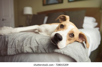 Tan Colored Dog Relaxing on Bed