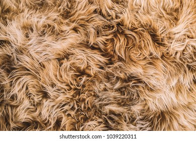 Tan Curly Fur Texture