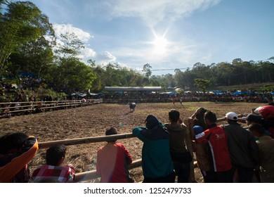 TANA TORAJA, SULAWESI, INDONESIA - November 26: Funeral ceremony on November 26, 2016 in Tana Toraja, Sulawesi, Indonesia