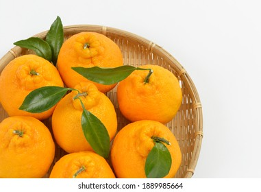 Tangerine Hallabong in a bamboo basket with white background, South Korea. It is a cultivar of citrus fruits bred in Japan in 1972