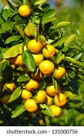 Tangerine orange fruit closeup.