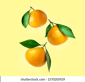 Tangerines of different shapes with leaf on a colored background isolated. Composition of a tangerines orange with leaves. Tangerines flying in the air
