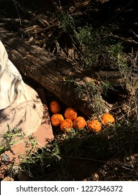 Tangerines left as offering at shrine for deceased person