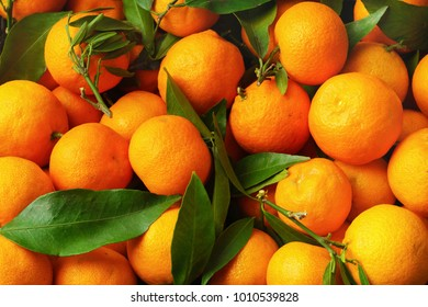 Tangerines (oranges, mandarins, clementines, citrus fruits) with leaves background pattern.Organic vegetarian food. Winter local fruits. Healthy detox eating concept. Top view, close up.