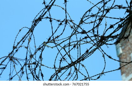 tangle of barbed wire to delimit the area not to go beyond a place with security restrictions