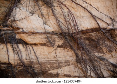 Tangled roots hanging on a red layered Sandstone cliff