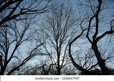 A tangled silhouette of bare tree branches hibernating in winter set against blue sky.