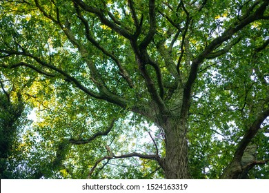 a tangled treetop  with many branches and still green leaves at the beginning of autumn