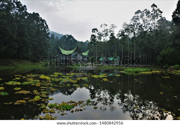 TANJUNG IPOH, NEGERI SEMBILAN- AUG 2019: BEAUTIFUL GREEN NATURE SCENERY OF LAKE FULL OF LOTUS PLANTS WITH FOREST TRESS AND BEAUTIFUL REFLECTION OF TRADITIONAL HOUSES OVER THE LOTUS LAKE