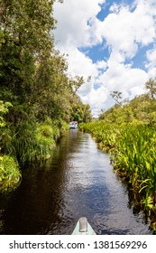 Tanjung Puting National Park, Borneo, Indonesia: peaceful navigation on the black water heading to Camp Leakey, the most famous feeding station for Orangutans inside the park