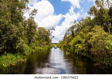 Tanjung Puting National Park, Borneo, Indonesia: the water of the river near Camp Leakey, the most famous feeding station for Orangutans inside the park, are of deep black color