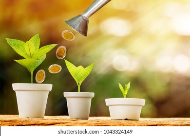 Tank of coin pouring drop to a flowerpot bank of money and seed plant growing value with savings put on the old wood in the morning sunlight, Business investment and asset management concept.
