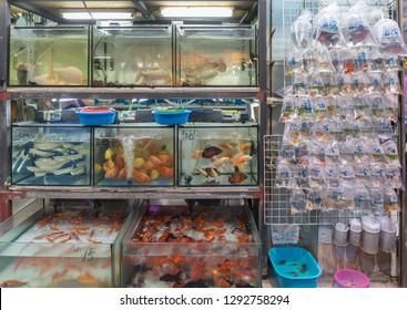 Tanks With Goldfish in Pet Shop at Tung Choi Street Hong Kong