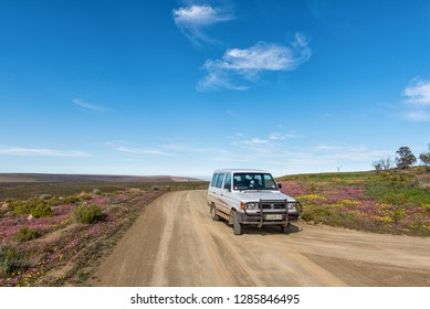 TANKWA KAROO NATIONAL PARK, SOUTH AFRICA, AUGUST 31, 2018: A road landscape with purple and yellow wild flowers near Gannaga Lodge in the Tankwa Karoo of South Africa. A vehicle is visible