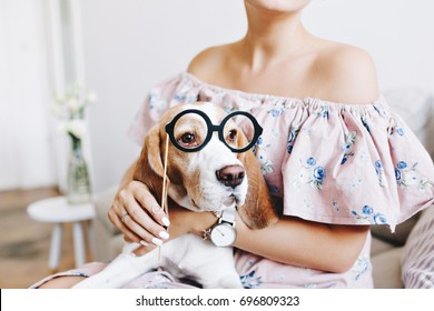 Tanned girl in dress with open top holding on her knees amazing beagle dog looking very funny. Close-up portrait of cute puppy in big round glasses looking away.