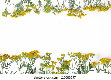 Tansy flower in the white paper.