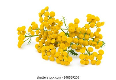 tansy flowers (Tanacetum Vulgare) isolated on a white background close-up. horizontal photo.