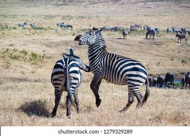 Tanzania Africa Ngorongoro