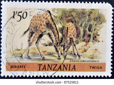 TANZANIA - CIRCA 1980: A stamp printed in Tanzania shows giraffes, circa 1980