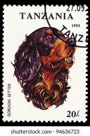 TANZANIA - CIRCA 1993: A stamp printed in Tanzania shows Gordon Setter, circa 1993