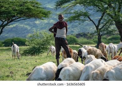 TANZANIA, NATRON LAKE - JAN 2020: Maasai boy shepherd with flock of sheeps and Ol Doinyo Lengai on background. Maasailand, Engare Sero, Natron lake coast, Rift Valley