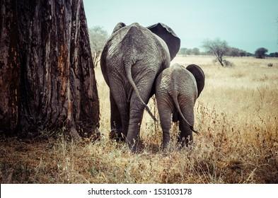 Tanzania, Tarangire National Park, Mother and baby elephant