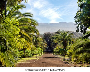 "the ""Taoro Parque"" a large leisure park over the old town of Puerto de la Cruz on tenerife. The park has a large population of palm trees and exotic plants and wide paths"