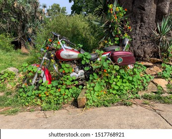Tapalpa, Jalisco, Mexico - September 27 2019: Unused abandoned red and silver motorcycle bike covered in tropaeolum majus aka capuchina, garden nasturtium, indian cress. Cardamindum majus flowering