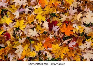 Tapis de feuilles au sol pendant l'automne